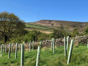 Free Tree planting